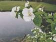 Tha garden