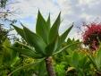 Casa Papagaio Funchal Madeira Studio with terrace