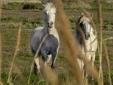 Equitação na Camargue selvagem e secreta